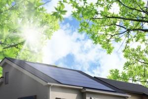 太陽光発電の屋根と新緑